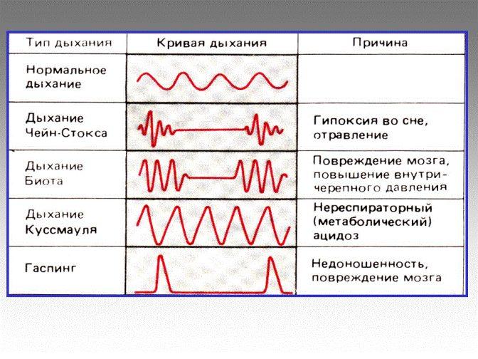 Типы дыхания в норме и при