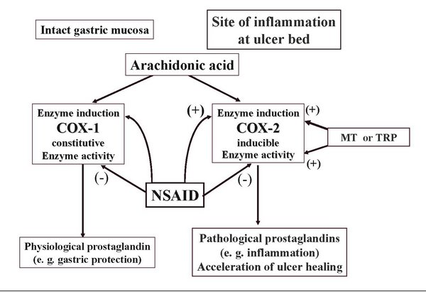 метаболизма арахидоновой